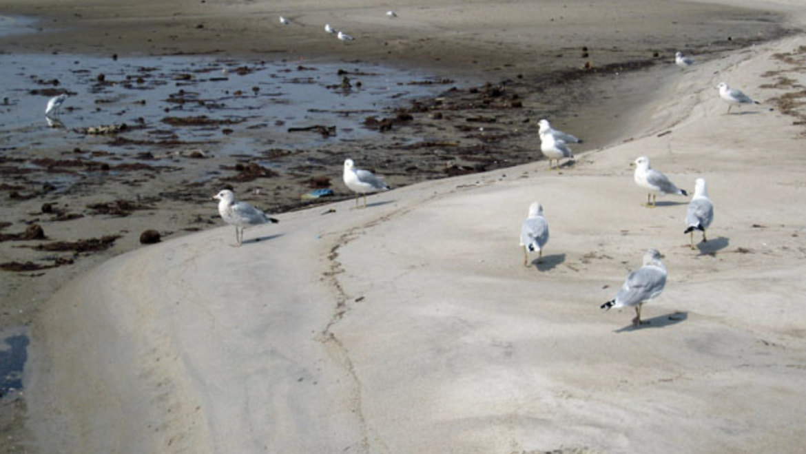 The Fall is a Great Time to Study Tidal Flat and Tidepool Sea Life