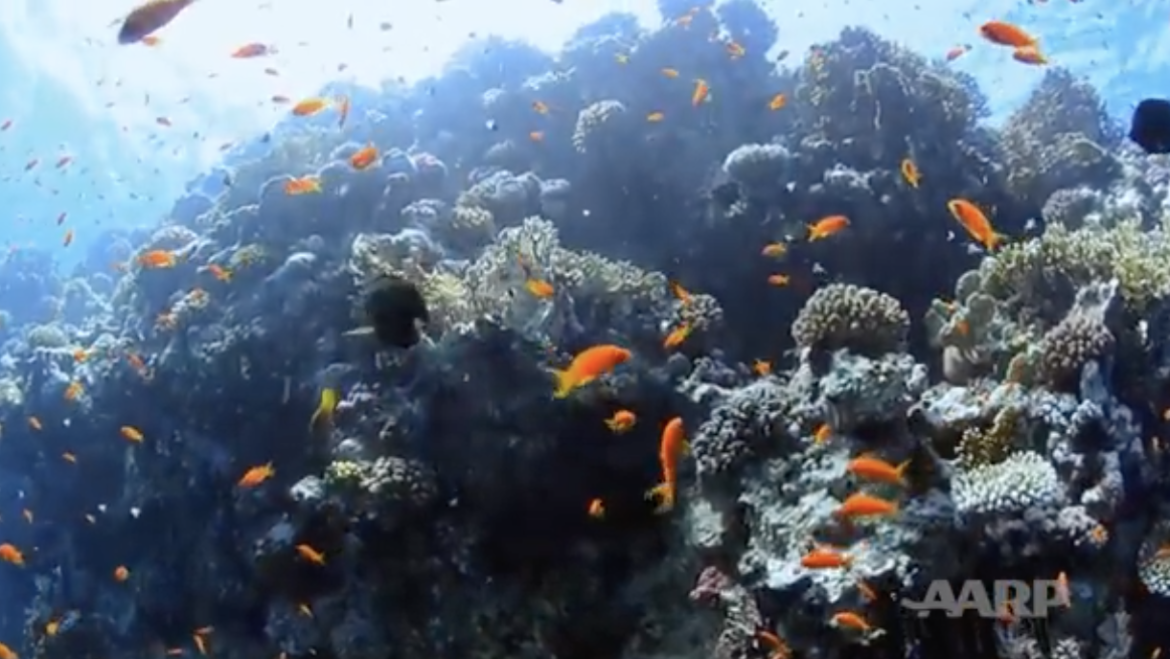 Fascinating Work by the Mote Aquarium Restoring Coral Reefs