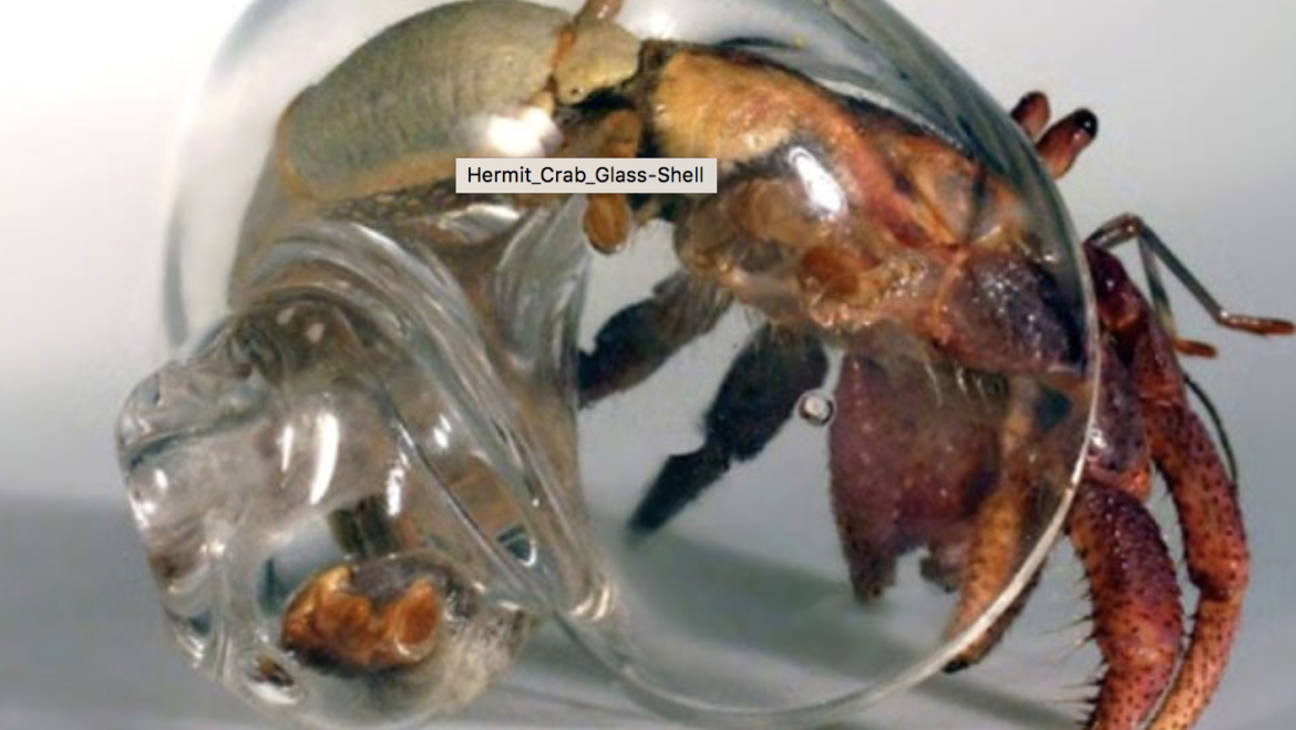Hermit Crabs Living in Glass Houses