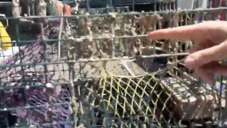 Come Explore a Lobster Trap