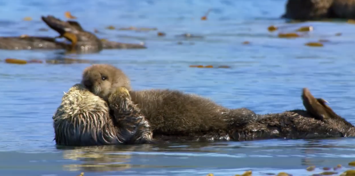 A Brief Ocean Voyage Compliments of BBC Earth