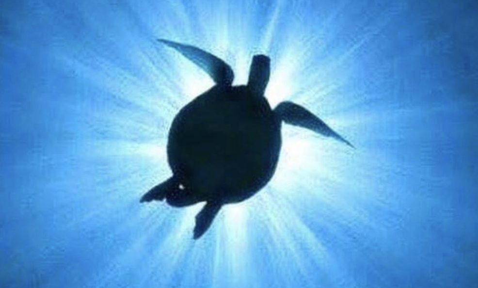 A Turtle Eclipse of the Sun!